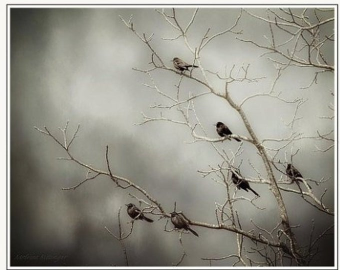 Featured listing image: Birds On Branches