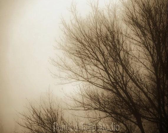 New Dawn In Winter