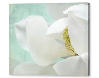 Magnolia Dreams
