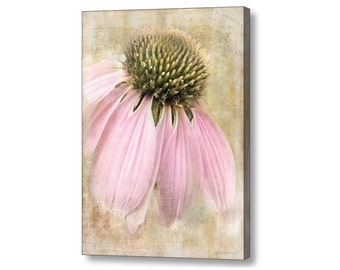 Faded  Coneflower