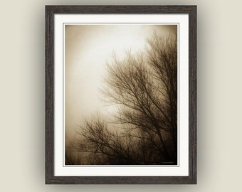 Nature Tree Branches Foggy Winter Morning Sunrise Surreal Zen Minimalist Landscape Sepia Brown Cream Fine Art Photography Print
