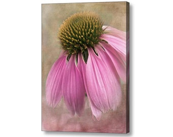 June Coneflower