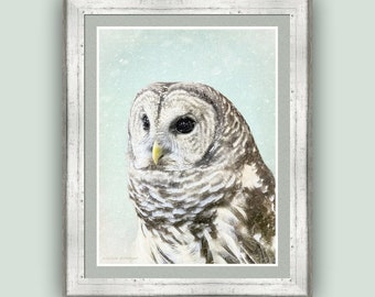 Cottage Chic Nature, Winter Snowfall Owl Fine Art Photography Print Bird of Prey, Wildlife Photography