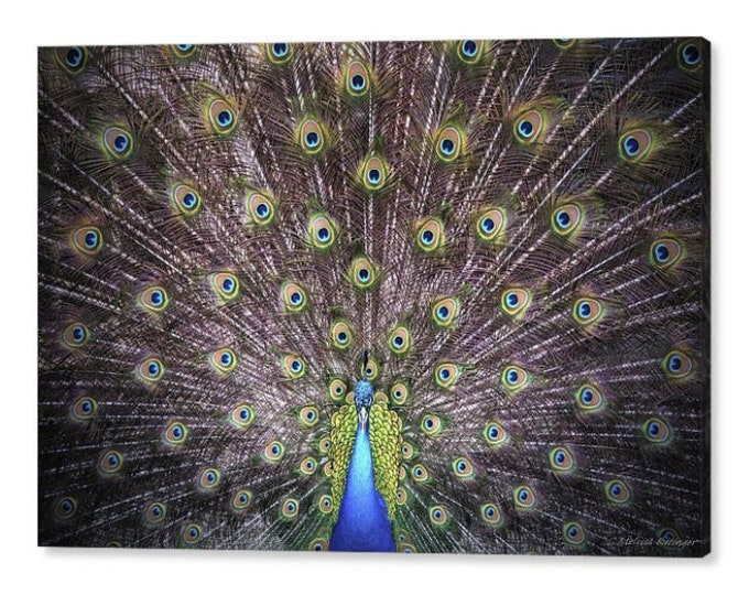 Featured listing image: Peacock Display