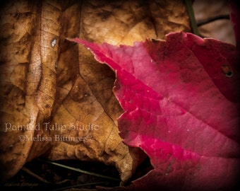 Red and Brown Fallen Leaves Autumn Nature Woodland Rustic Landscape Home Decor Fine Art Photography Print or Gallery Canvas Wrap Giclee