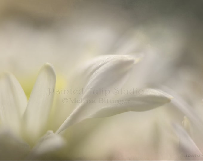 Featured listing image: White Petal Dreams
