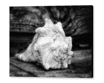 Conch Seashell Nautical Beach Nature Black & White Still Life Fine Art Photography on Giclee Gallery Wrap Canvas
