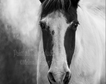 Black and White Paint Horse, Spotted Saddlebred  Fine Art Photography Print, Equine Horse Lover, Horse Photography, Equestrian Gifts