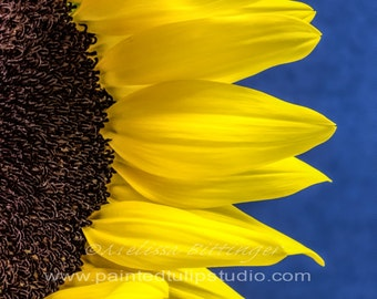 Sunflower Peek On Blue