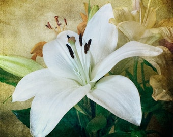 Lilies for Linda