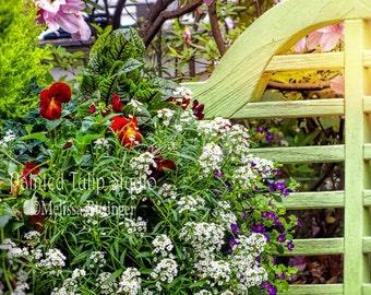 Charleston SC Cottage Garden Decor Green Garden Bench Colorful Blooming Flower Basket Azaleas Fine Art Photo or Gallery Canvas Wrap Giclee