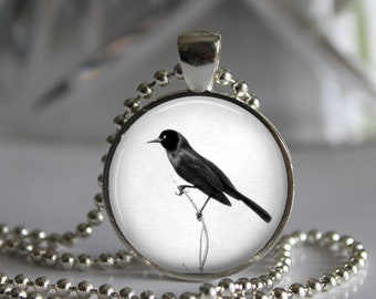 Blackbird Black White Photo Pendant Necklace Jewelry