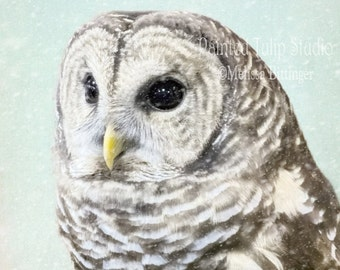 Owl Winter Snow Mint Aqua White Pale Pastels Cottage Chic Wildlife Bird Nature Fine Art Photography on Giclee Gallery Wrap Canvas