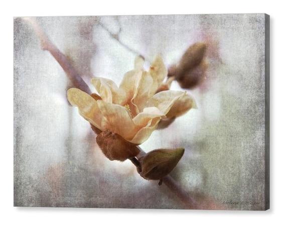 Magnolia Elizabeth