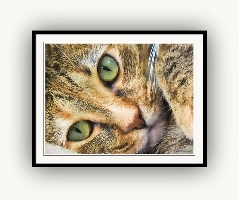 Fine Art Print or Giclee Gallery Wrap Canvas Green Eyed Feline Cat Portrait Closeup Cat Lover/'s Gifts