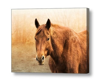 Chestnut Sorrel Horse Equestrian Rustic Western Southwestern Fine Art Photography Print or Giclee Gallery Wrap Canvas