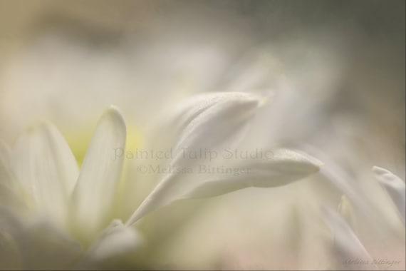 White Petal Dreams