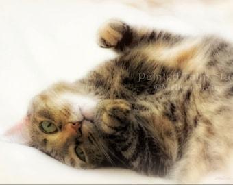 Sleepy Tabby Cat Feline Portrait Dreamy Cute Kittycat Cat Napping Fine Art Photography Print or Canvas Wrap Giclee
