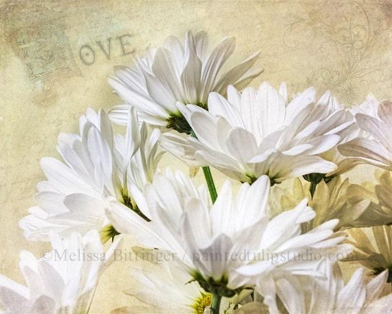 Romance and White Daisies