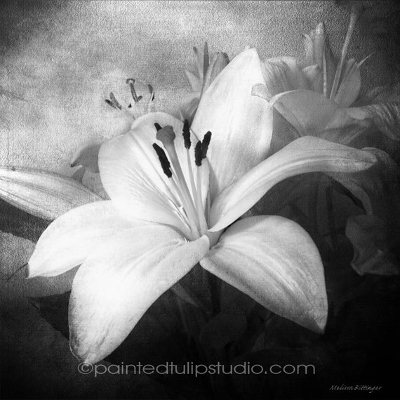 Lilies for Linda b/w