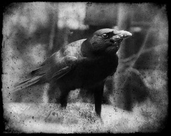 Dirty Black Crow Vintage Grunge Surreal Gothic Goth Raven Crow Black and White Fine Art Photography Print or Gallery Canvas Wrap Giclee