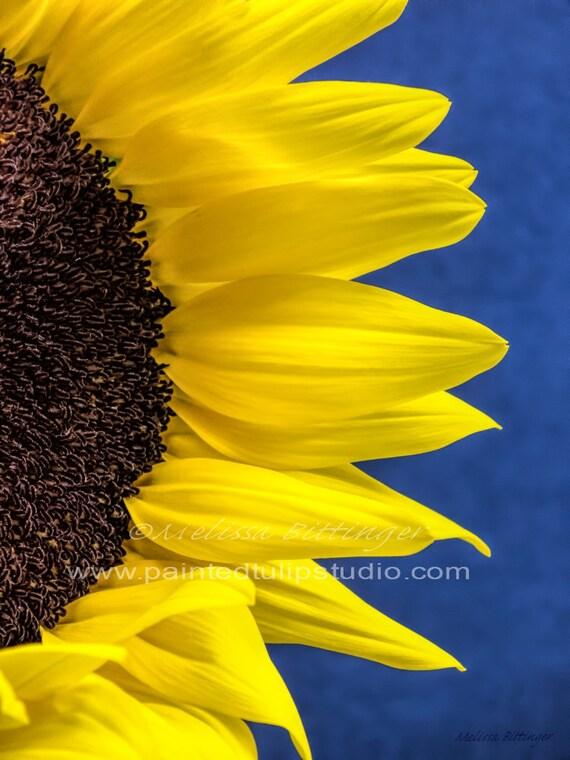 Sunflower Peek On Blue