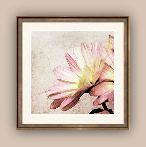 Shabby Pink Petals