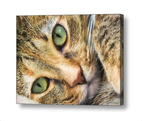 Green Eyed Tabby Cat