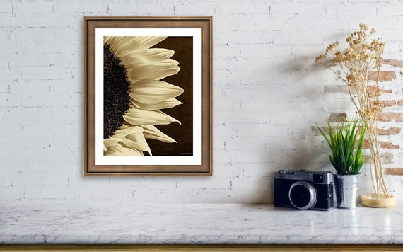 Sunflower Solitude
