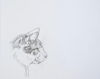 Original pencil drawing study of cat sketch