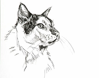 Original pen and marker drawing study of cat sketch