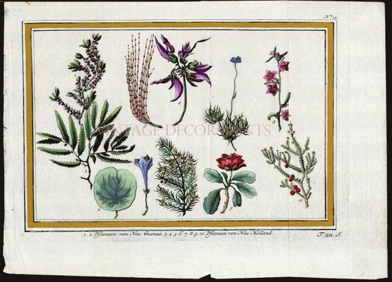 100% genuino 2019 professionista acquista il più recente Incisione botanica di piante esotiche della Nuova Guinea di J.Y.Schley  1763. Mano colorata stampa di pianta tropicale decorativo di acquerello
