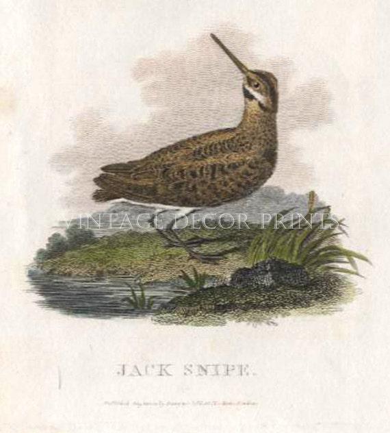 Game Bird ART PRINT FREE UK P/&P Great Snipe