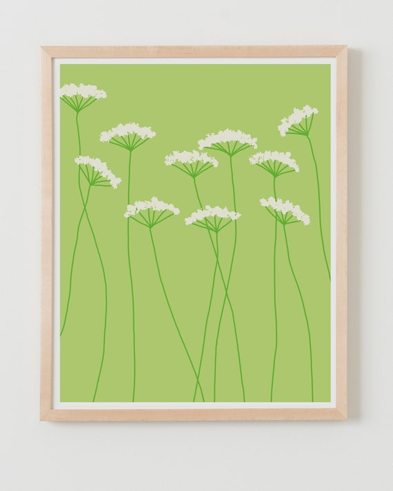 Fine Art Print.  Queen Anne's Lace Flowers. Available Framed or Unframed.