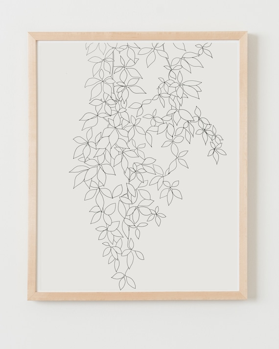 Fine Art Print.  Vine.  Available Framed or Unframed.