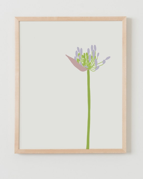 Fine Art Print. Agapanthus. Available Framed or Unframed.