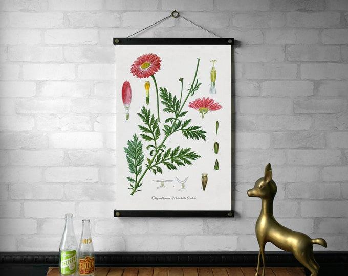 Chrysanthemum Botanical Chart