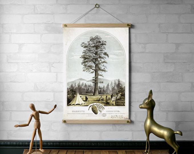 Big Tree Botanical Chart