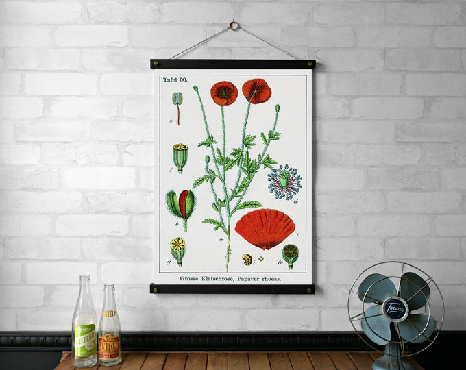 Poppy Botanical Chart