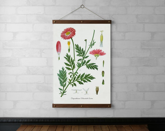 Chrysanthemum Botanical Chart