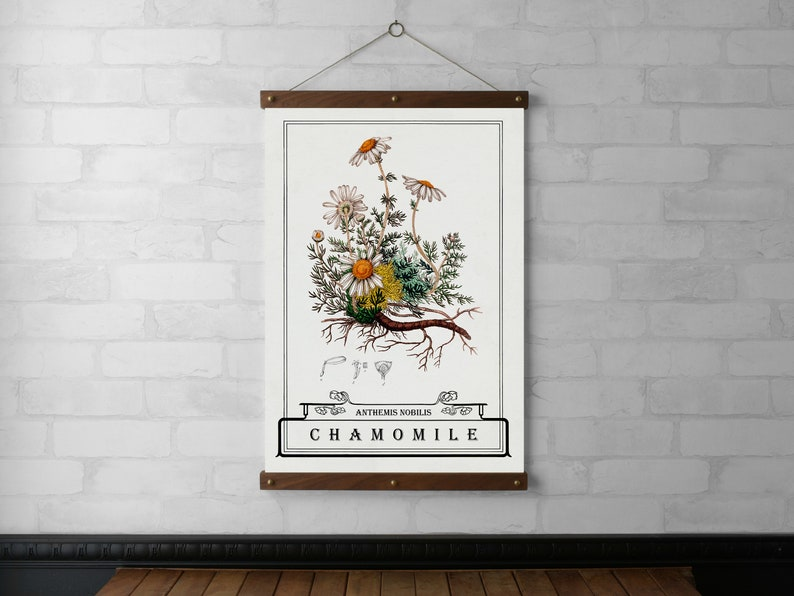 Chamomile Typography Botanical Chart Wall Hanging Wood Poster image 0