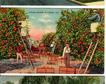 Vintage PostCards 3 card bundle 1940s from Florida Destinations, Key West, Miami, Lake Worth
