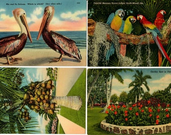 Vintage Postcards, 4 Unused Cards, Florida Landmarks Early 1950s