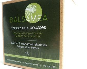 Balsam Fir new growth shoot and elderberry tea / Tisane aux pousses de sapin