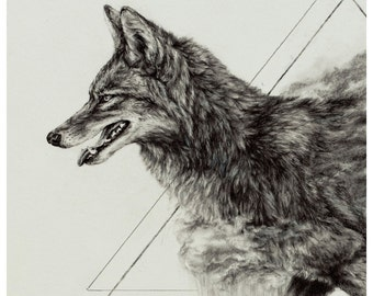 Coyote - 8 x  10 inch giclee print of original drawing