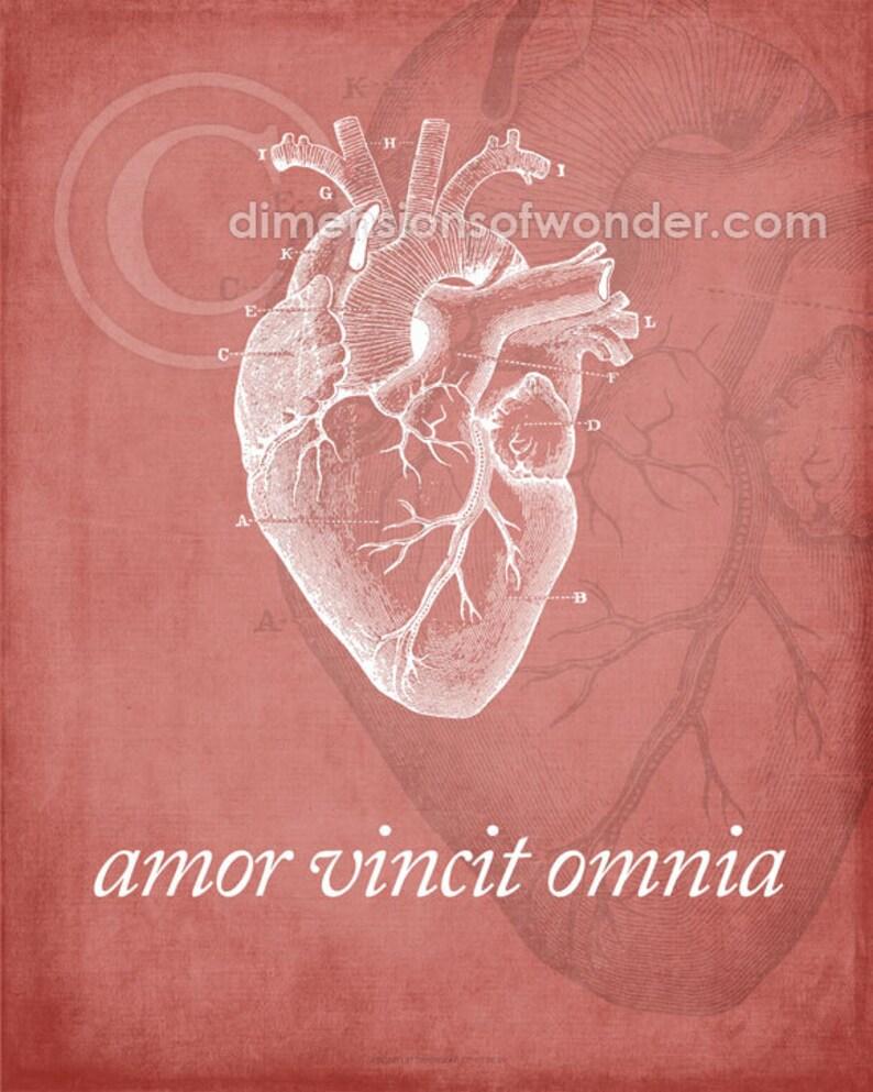 Citaten Hart Onder De Riem : Anatomische hart art print latijnse citaat amor vincit etsy