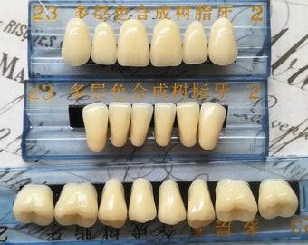 28 Human Teeth made of Resin - Morbid Teeth tooth Molar Resin human Teeth 28 piece set
