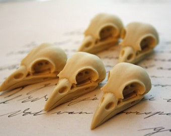 5 Bird Skull Raven Skull Crow Skull Cabs Resin Cabochon Taxidermy Animal Steampunk Gothic Goth Skull Ivory 35x16mm 5 PIECES - MEDIUM
