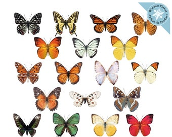 Anti-collision window stickers help prevent bird-strikes  FREE UK DELIVERY! Large Beautiful Colourful Butterflies Cling Window Stickers