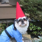 Custom Made/Order for Traveling Gnome Dog Halloween Costume for xsmall-medium size dogs